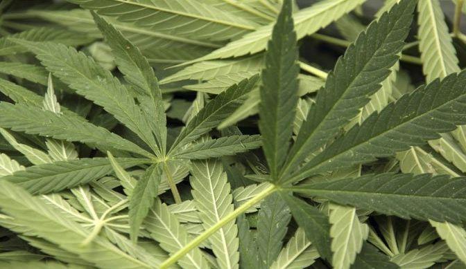 US-Regierung hat ein Patent auf medizinisches Marihuana – Bayer-Monsanto wird sich die Marihuana-Industrie unter den Nagel reißen! |