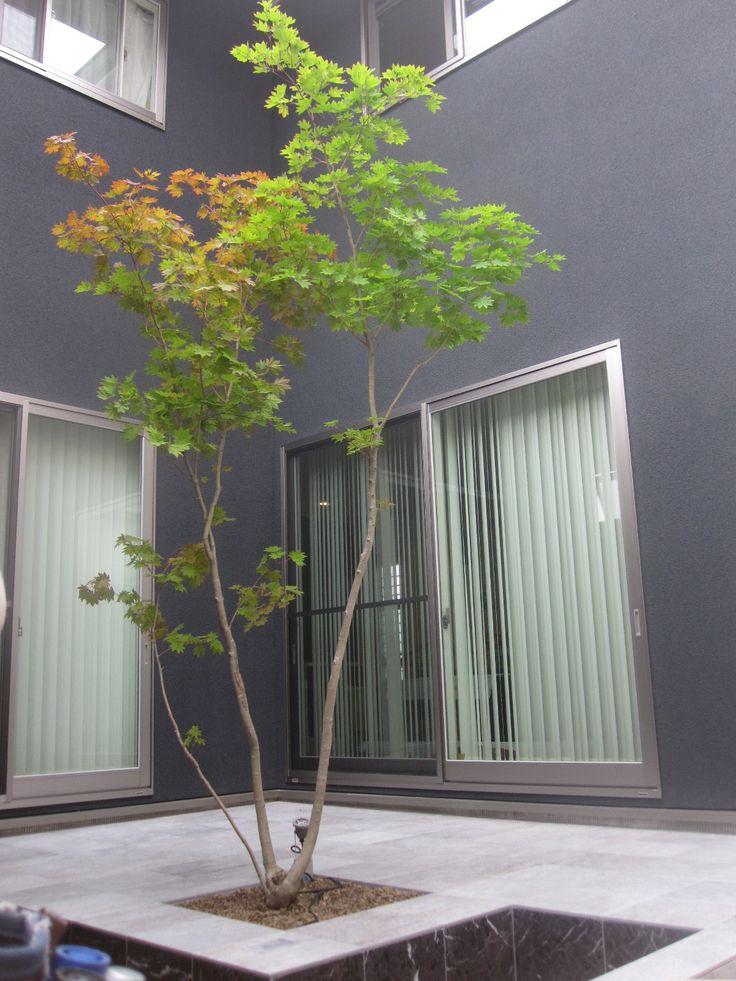 人気のシンボルツリー ヤマモミジ 久留米市 ガーデン 荒木エクステリア株式会社