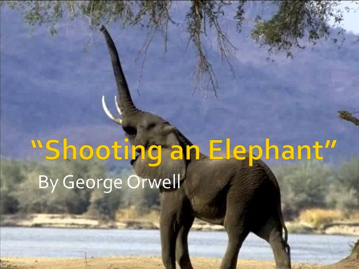 best kcu summer reading images reading  yeminli sozluk ingilizce turkce hikaye shooting an elephant