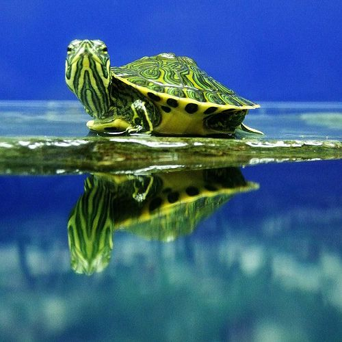 Photo by Tina Negus love baby turtles