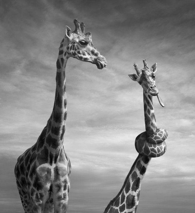 Photo Manipulations by Dariusz Klimczak