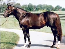 Storm Cat- (foaled in 1983) was an American Thoroughbred stallion whose breeding fee during the peak of his stud career was $500,000, one of the highest in the world, the highest being his Grandsire, the Canadian champion, Northern Dancer at an incredible $1,000,000 (with no guarantee) 1984-1987.[1] As such, he was one of the few horses with a 24-hour armed guard.