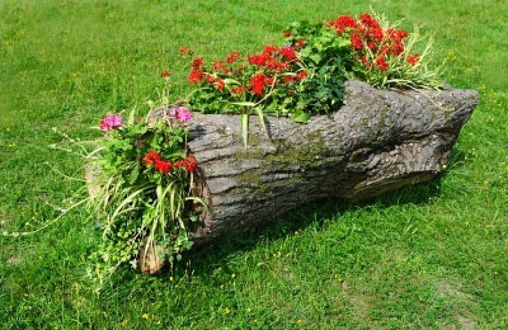 Image detail for -Original Flower Bed In A Wooden Log Of Formal Garden Royalty Free ...