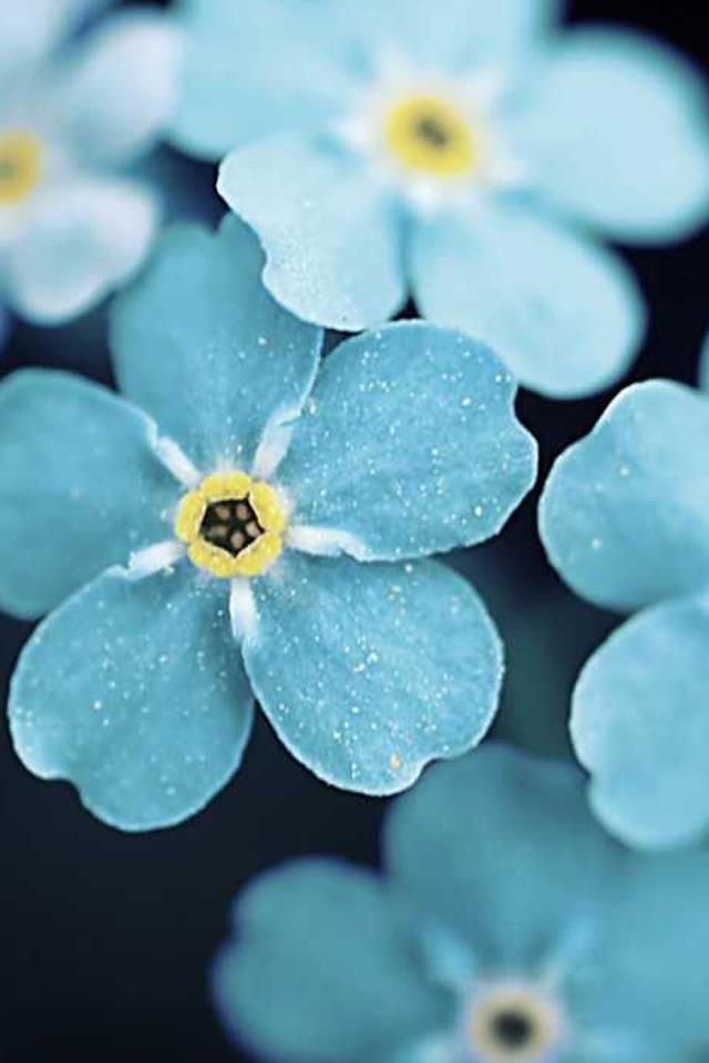 {Forget-Me-Nots}