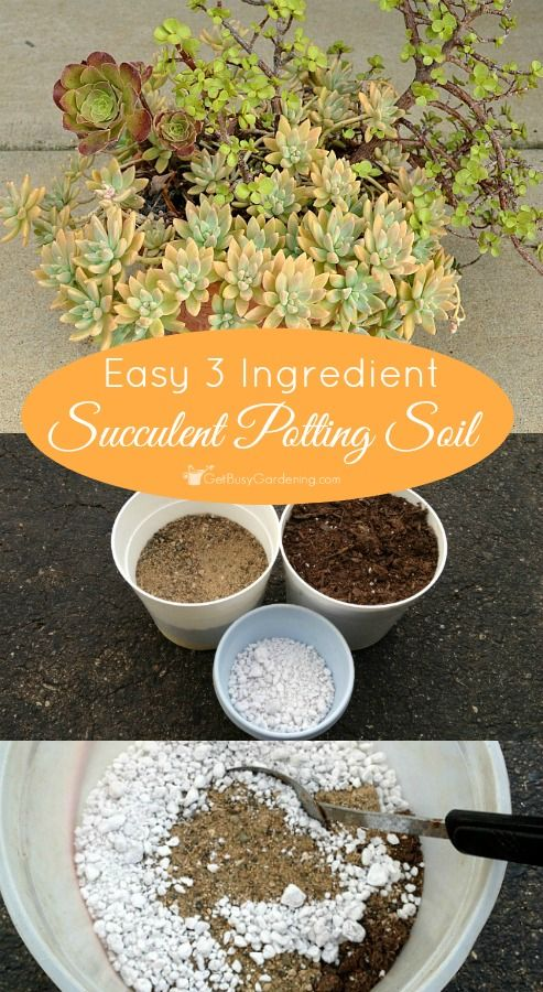 Super easy 3 ingredient succulent potting soil recipe with step-by-step instructions! Making your own succulent potting soil is cheaper than buying the commercial stuff.