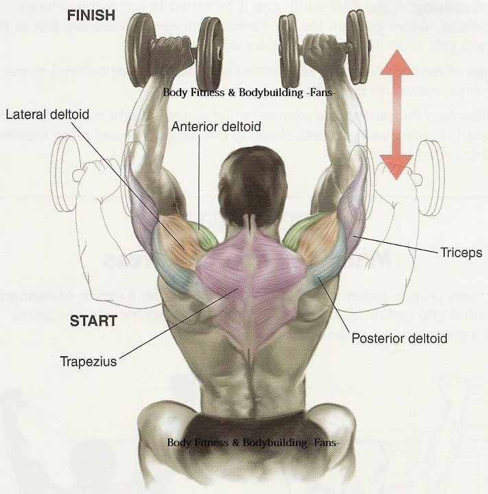 Shoulder Press Movement and Muscles