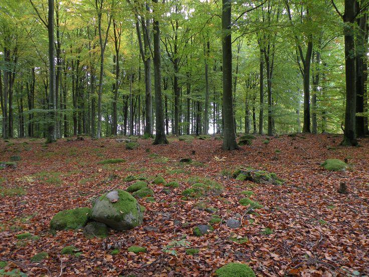 Naturen runt Stoby - vackert och fult - bokskog