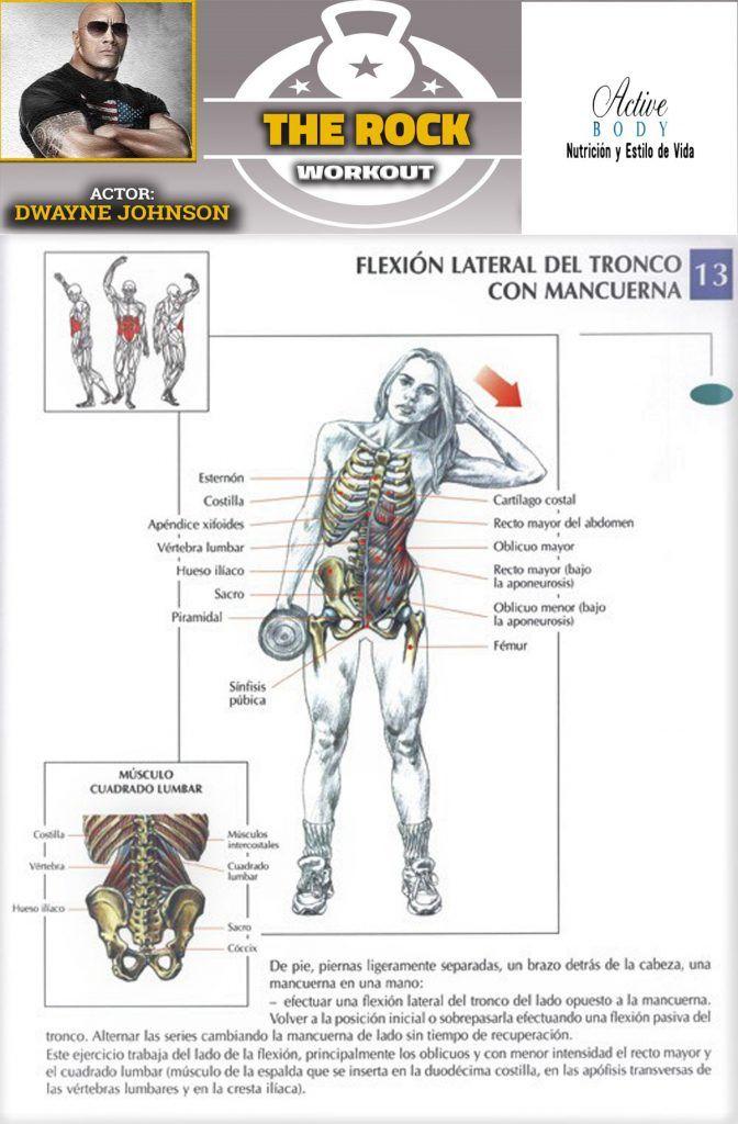 musculos lateral abdomen