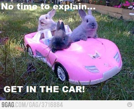 lmao: Bunnies Girls, Sunday Brunch, Funny Bunnies, Pink Cars, Easter Bunnies, Mean Girls, Getaways Cars, True Stories, Animal
