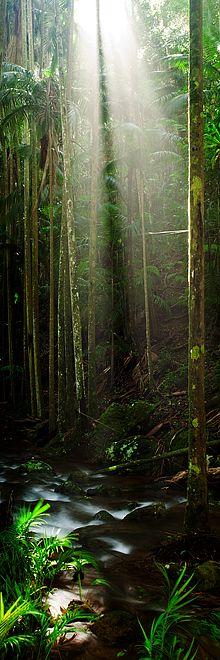 Tamborine National Park, Queensland