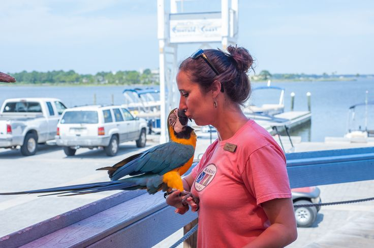 When at Sandestin Golf and Beach Resort, make sure to stop by Marina Bar and Grill and say hello to the resident Macaw, Maryann!
