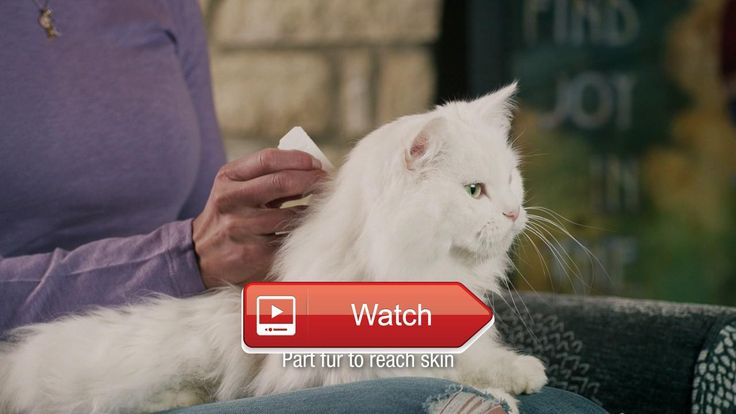 😸 How to Apply SENTRY Fiproguard for Cats 😹 SENTRY Fiproguard for Cats protects your pet from fleas ticks and chewing lice It battles adult…