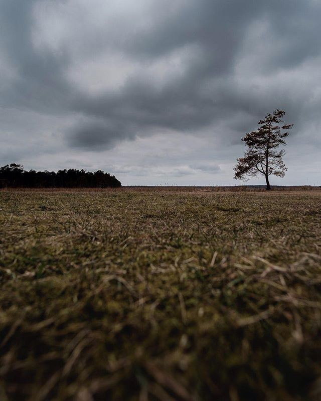 The pace of nature.  #weroamsweden #öland #sweden #fujifilm_xseries