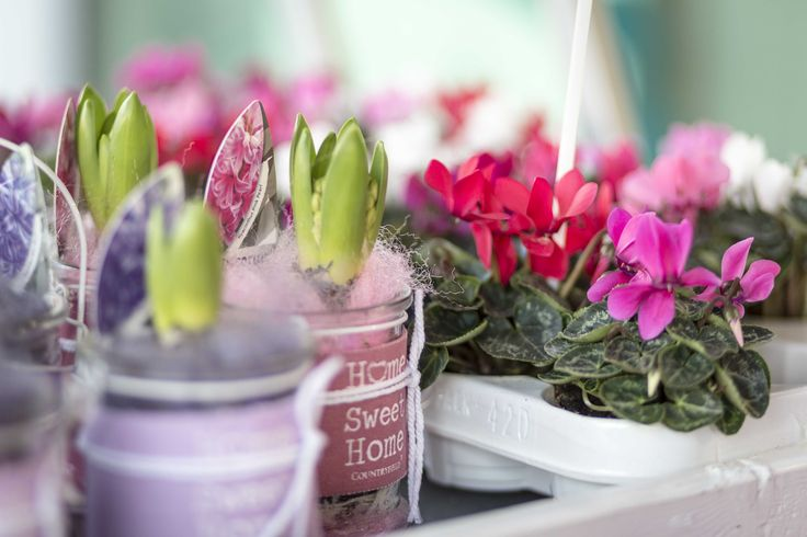 Reflore small flower plants