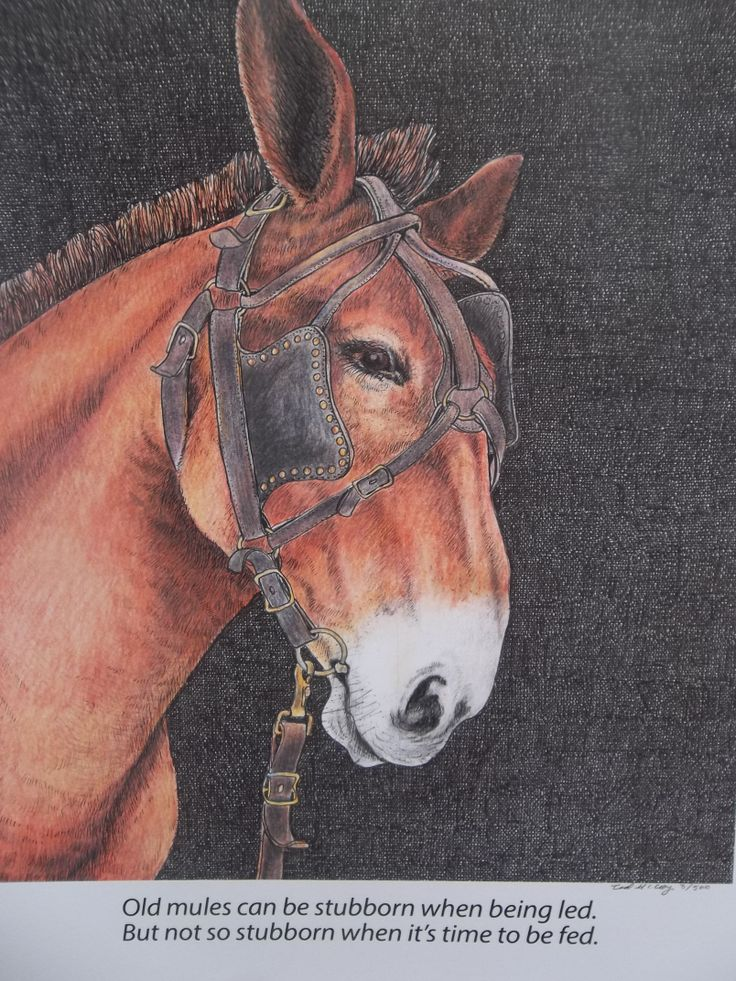 """The """"Old Red Mule"""" is a pen and ink drawing with colored pencils. The price is $40.00"""