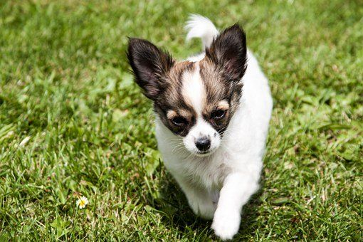 Pin On Puppies For Sale In North Carolina
