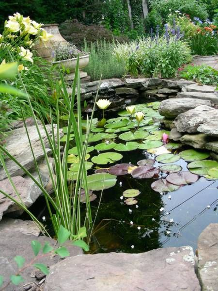 17 best ideas about small backyard ponds on pinterest for Small pond care