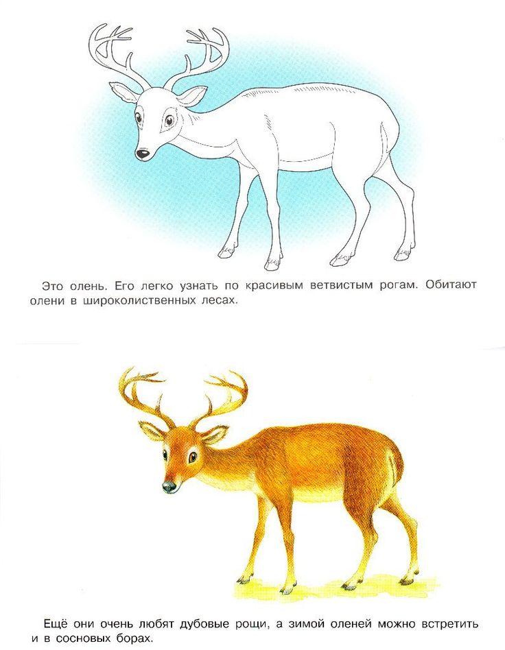 Раскраски с животными | МАМА И МАЛЫШ