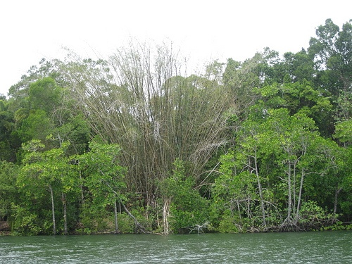 Daintree River by fifikins, via Flickr