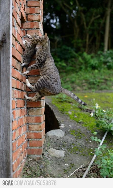 Spider-Cat MomMothers, Bricks Wall, Spider, Cat Climbing, Kittens, Kitty, Cat Lady, Baby Cat, Animal