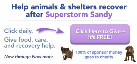Your FREE daily click @ http://www.TheAnimalRescueSite.com helps fund meals for Shelter Animals in Need. Check them out and consider clicking every day!