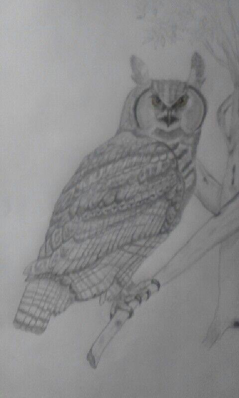 Great Horned Owl my momma drew for me