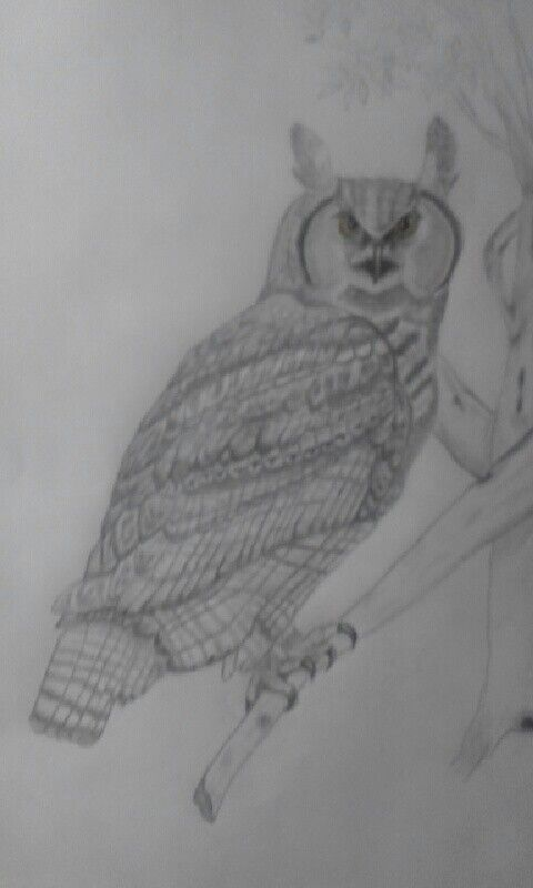 Great Horned Owl my momma drew for me