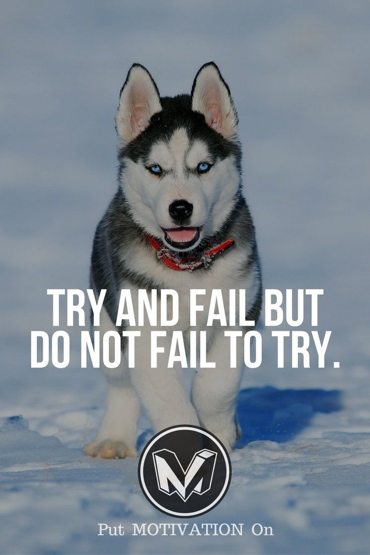 Try and Fail