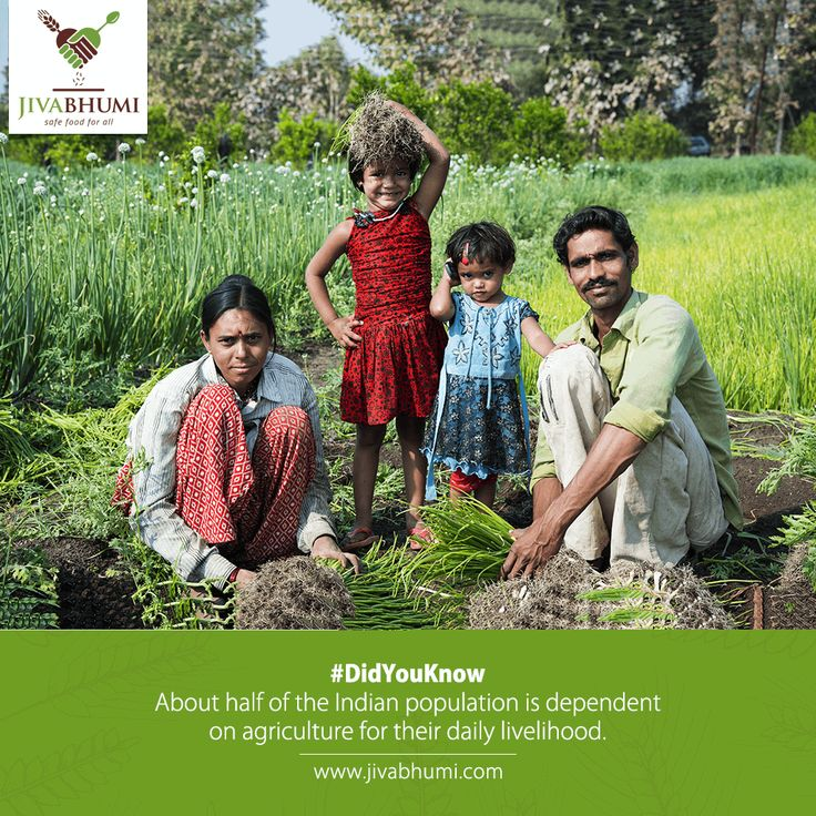 Indian agriculture sector accounts for 18 per cent of India's gross domestic product (GDP) and provides employment to 50% of the countries workforce. Every time you buy a #Jivabhumi product, you contribute towards the betterment of half the population. | http://bit.ly/shop_jivabhumi #NaturalFood #FarmFood #HealthyFood #Farmers #DidYouKnow