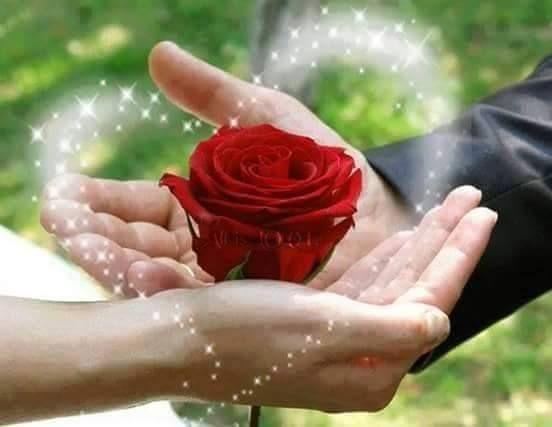"""✿⊱❥ """"Tudo que de fato importa entender nessa vida, é que nós, separados somos apenas um imenso acúmulo de nada. Voltas e voltas sem chegar a lugar nenhum. Tempo perdido. A história do existir só se escreve a muitas mãos... Mãos entrelaçadas resistindo à indiferença, ao ódio, à presunção do pensar-se superior... Acredite, não há um topo, não há maiores nem menores nesse enredo. Somos harmonia, cumplicidade, perdão, altruísmo, fraternidade. Somos respeito, humildade... Somos um."""" Gi Stadnicki"""
