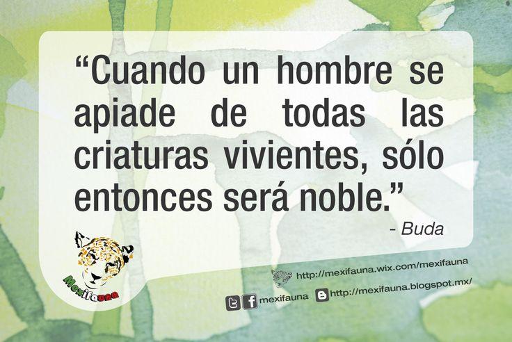 """#Ecofrase """"Cuando un hombre se apiade de todas las criaturas vivientes, sólo entonces será noble."""" - Buda"""
