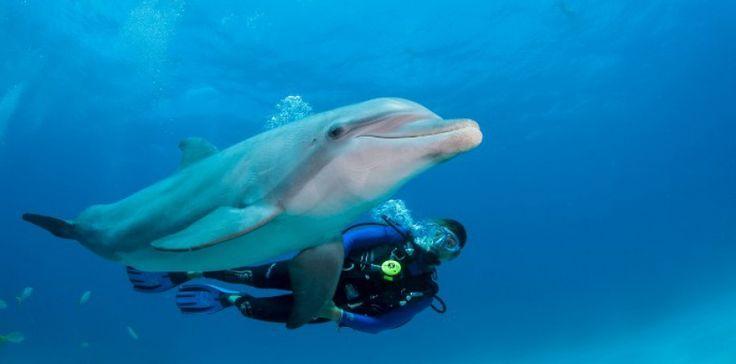 Les humains comme les dauphins connaissent des épisodes d'arythmie cardiaque quand ils plongent en eau profonde. IMAGE SOURCE/AFP
