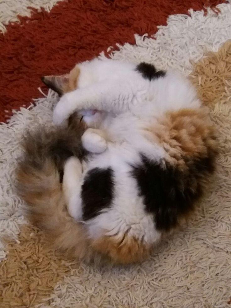 My lovely cat Milou!