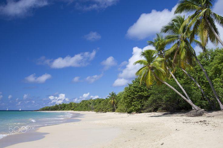 """Sandy Beach on Tropical Island - Sandy Beach on Caribbean Tropical Island Travel Photography. From """"Caribbean"""" photo collection. #sandybeach #tropicalisland #seaside #caraibes #tropicalcoast"""
