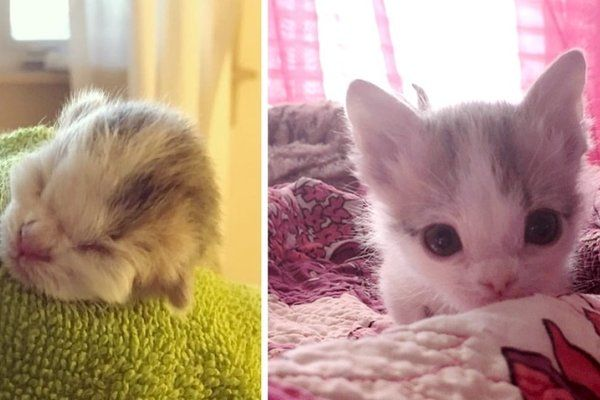 Kitten Abandoned At Birth Found Family That Saved Her Life Even