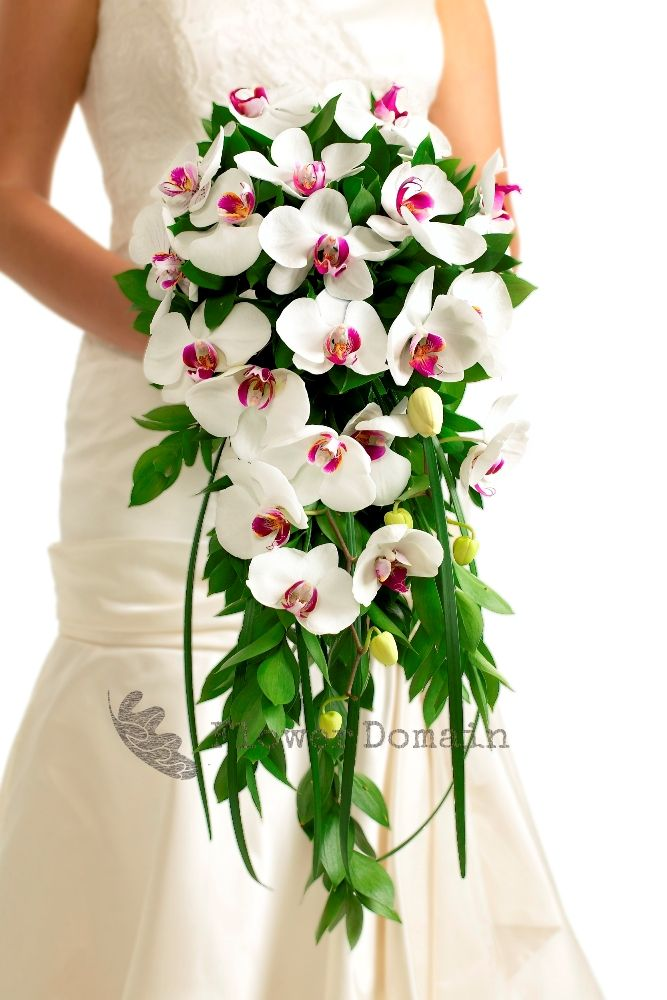 Phalaenopsis Orchid Trailing Bouquet BouquetPhalaenopsis OrchidOrchidsBridal BouquetsWedding