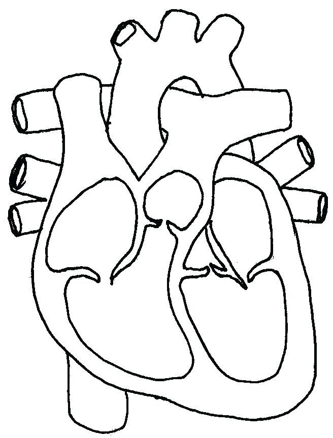Human Heart Coloring Pages Science Circulatory System Page For