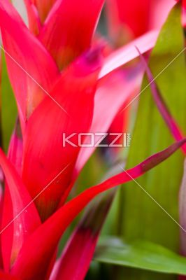 Pink Stem - A tropical plant with a pink stem in Palm Beach, Florida.