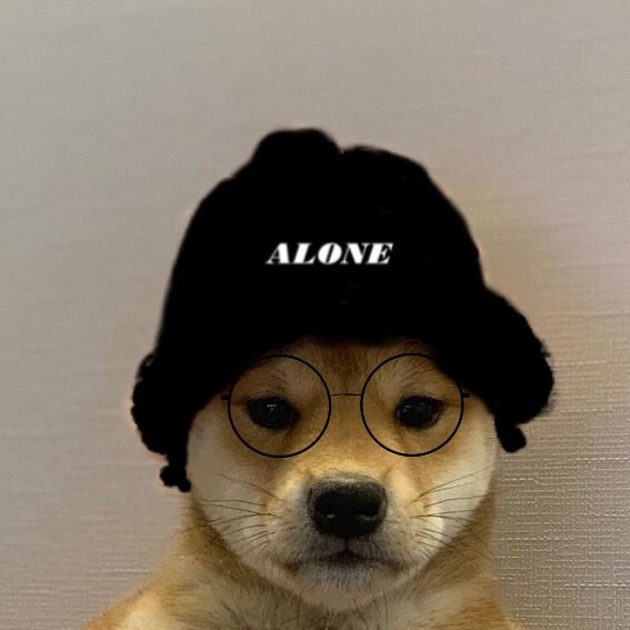 Dog Wif Hat Image By E Girl Ethan In 2020