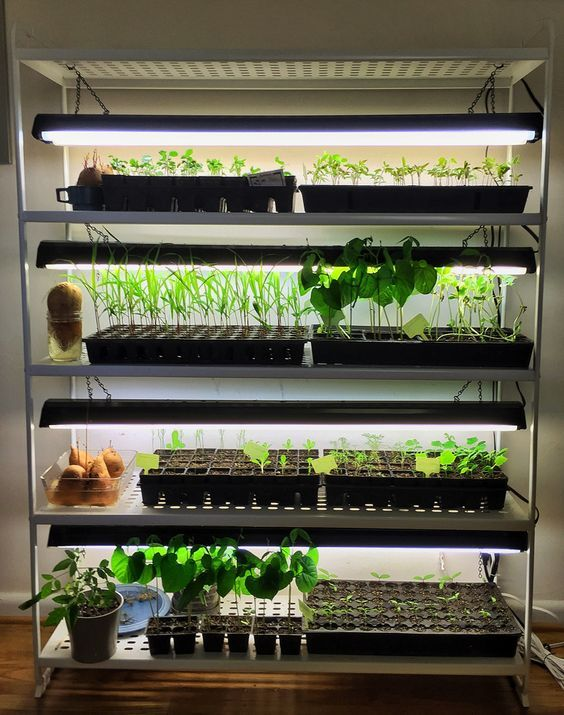 Top 25+ best Plant grow lights ideas on Pinterest | Grow ...