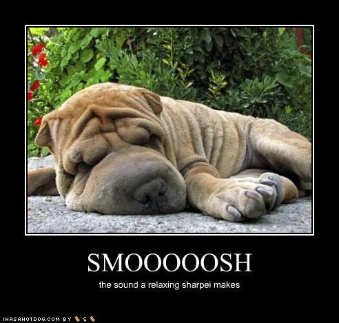 funny shar pei pictures | Free Funny Pictures: Funny Shar Pei Dogs