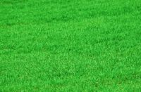 Finest Quality Turf & Topsoil Suppliers in Essex • Paynes Turf - http://paynesturf.co.uk/