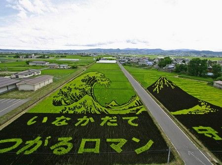 Rice Crops {Hokusai's Great Wave}