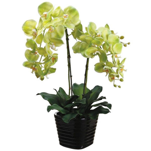 "Green Phalaenopsis 24"" High Potted Faux Silk Orchids - #W7609 ($70) ❤ liked on Polyvore"