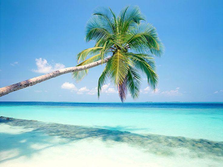 Punta Cana, Playa Del Carmen, Palms Trees, Travel, Places, Riviera Maya, Tropical Beach, Zucchini Cake, Playadelcarmen