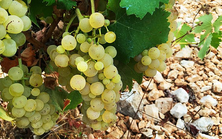 Winemaking: The Ionian Islands - Greece Is