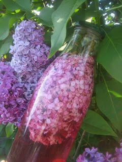 En ce moment, c'est la fleuraison du lilas. J'aime beaucoup cette odeur. Et ça m'inspire... J'avais tenté le macérât à base d'huile, mais ...