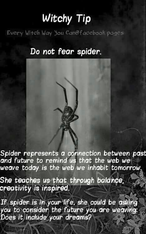 Do not fear spider