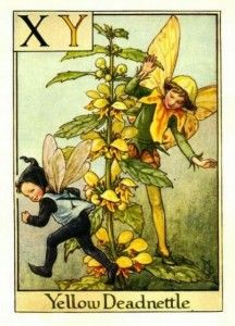 Yellow Deadnettle Flower Fairy » Flower Fairy Prints - Cicely Mary Barker Flower Fairies