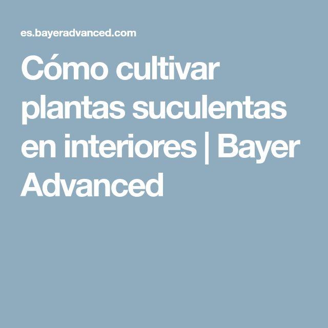 Cómo cultivar plantas suculentas en interiores   Bayer Advanced
